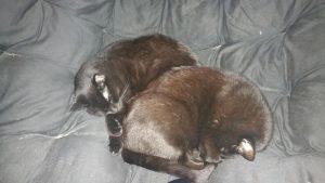 sleepy kittehs