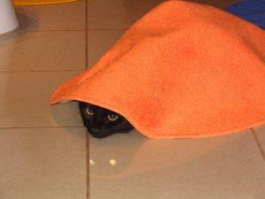 go away; i'm hiding