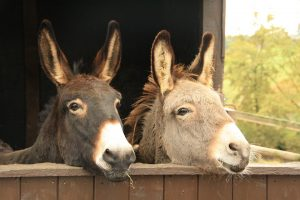 donkey buds just chilling.